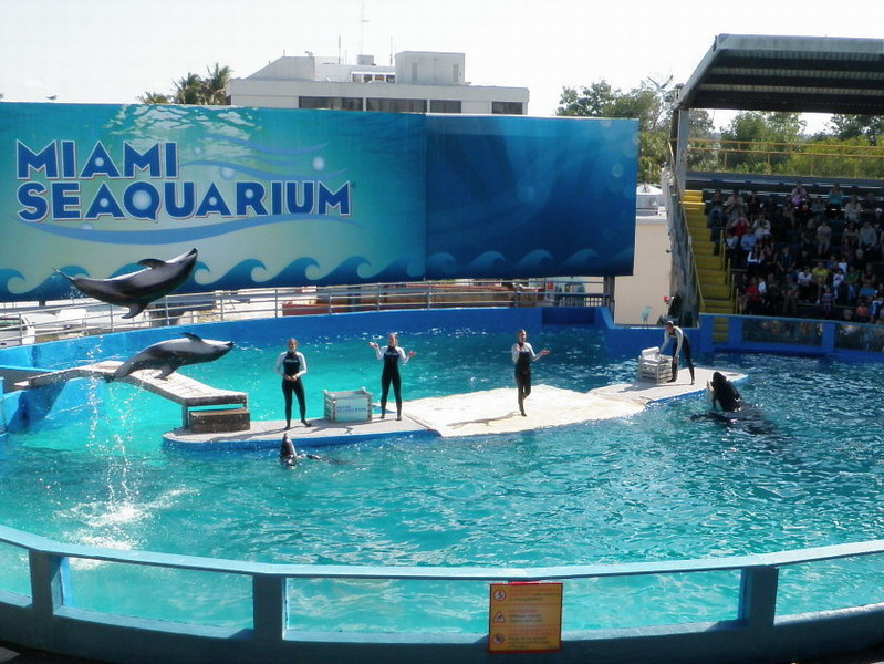 These are pacific white sided dolphins and they live and perform in