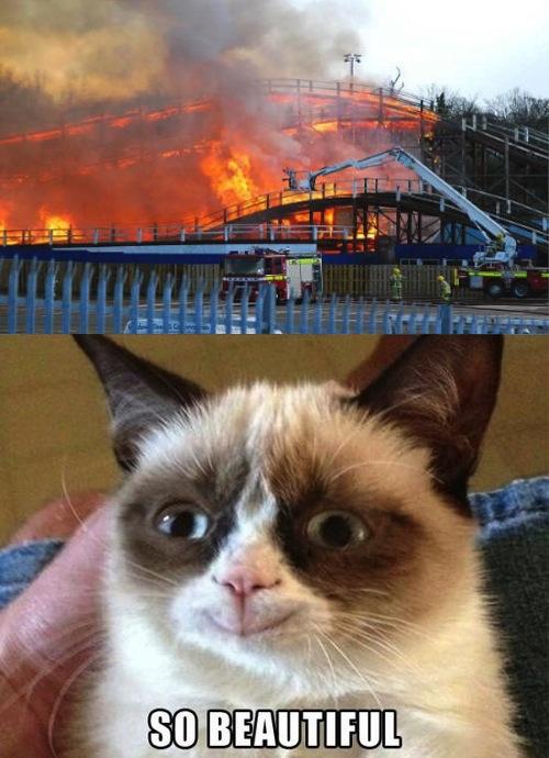 theme park review � tprmemes 3 amusement park grumpy cat