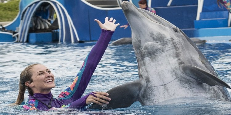 New Dolphin Show Coming to SeaWorld!