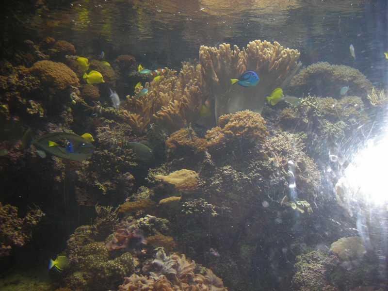 Photo TR: Derek at the Baltimore Aquarium - Random, Random ...