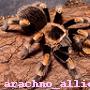 arachno_allie