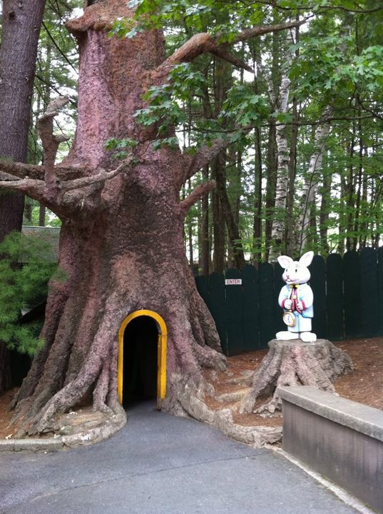 This is how the keep acers out of the alice in wonderland attraction