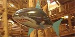 SHARKS! At WDW Wilderness Lodge!
