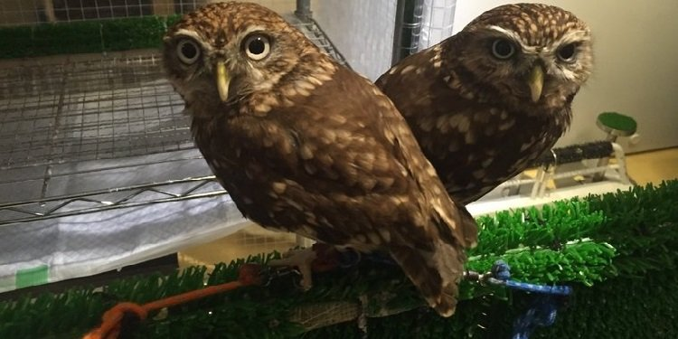 Japan Update: The Owl Cafe!