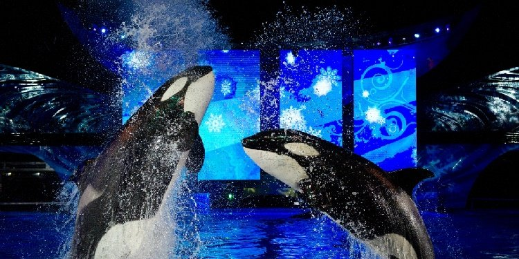Details on SeaWorld's Christmas Celebration!